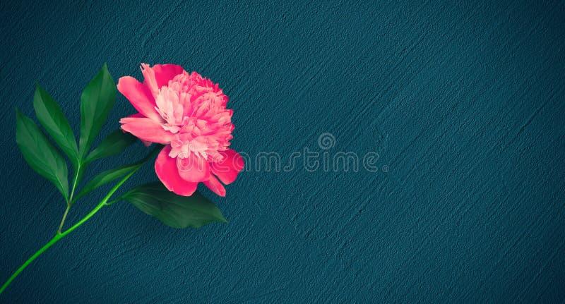Mooie Bloemenachtergrond met roze pioenbloem royalty-vrije stock foto