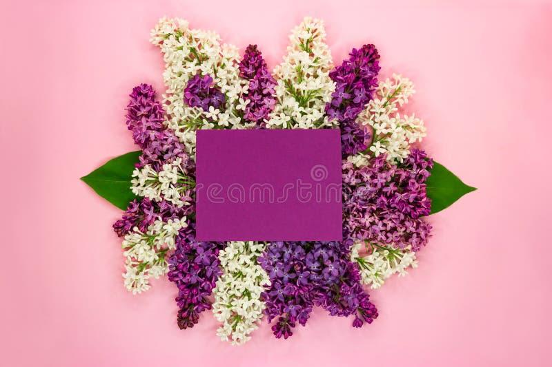 Mooie bloemensamenstelling van witte en purpere lilac bloemen met violette lege kaart en plaats voor tekst op roze achtergrond royalty-vrije stock fotografie
