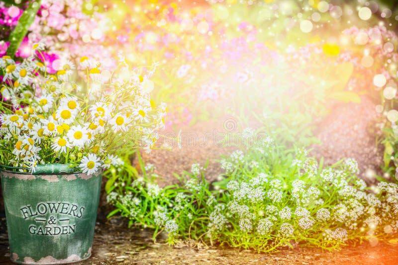 Mooie bloementuin De aardachtergrond van de de zomertuin met mooi bloembed, emmer met madeliefjes, zonlicht en bokeh royalty-vrije stock foto's