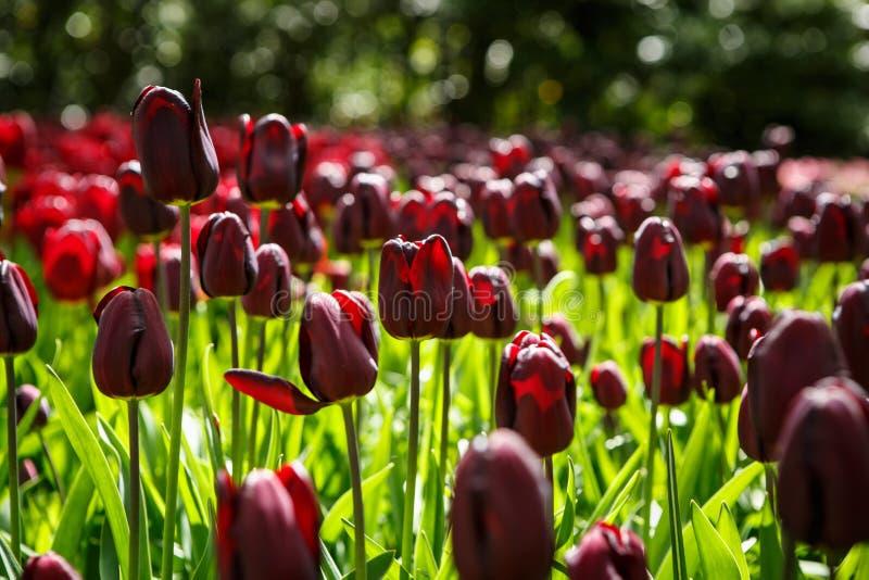 Mooie bloemtuin met kleurrijke bloeiende bloemen royalty-vrije stock afbeelding