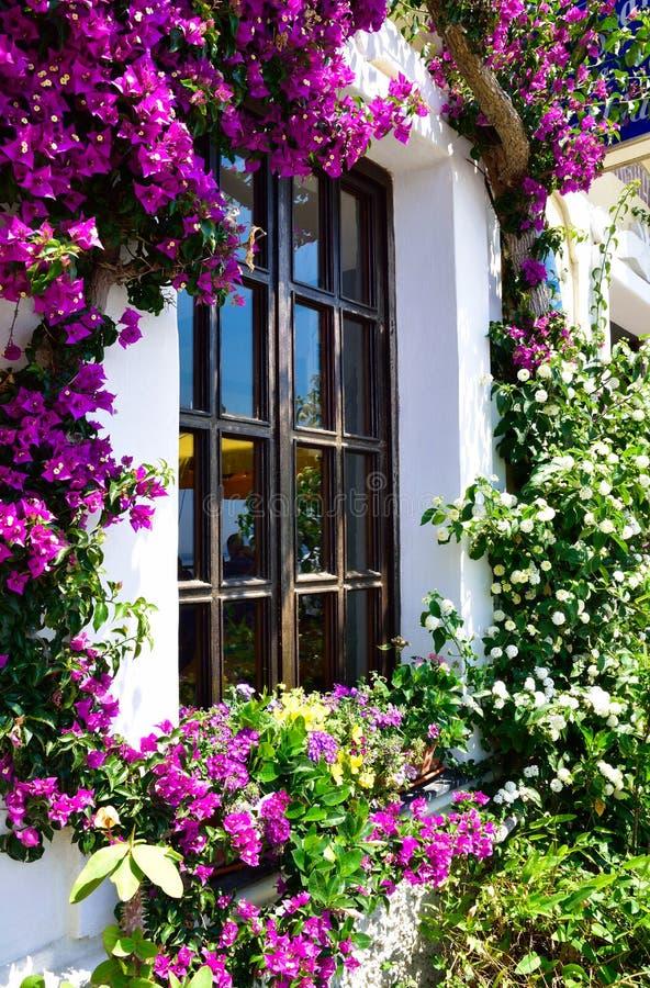 Mooie bloemtuin in Santorini royalty-vrije stock afbeeldingen