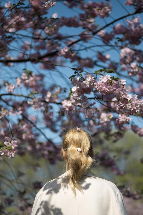 Mooie blonde jonge vrouw die in Sakura Cherry Blossom-park in de Lente van aard en vrije tijd genieten tijdens haar die reizen royalty-vrije stock fotografie