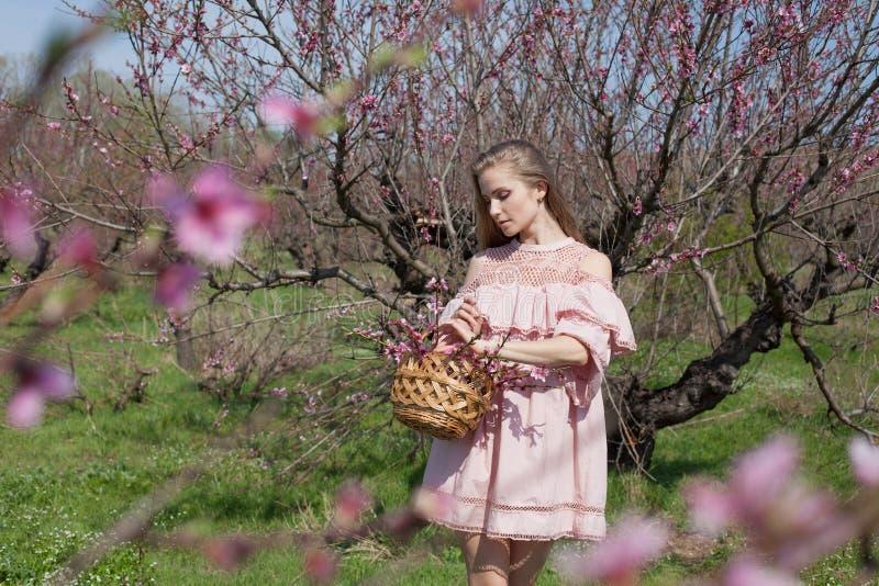 Mooie blondevrouw in een gebloeide Perziktuin in de lente met roze bloemen royalty-vrije stock foto's