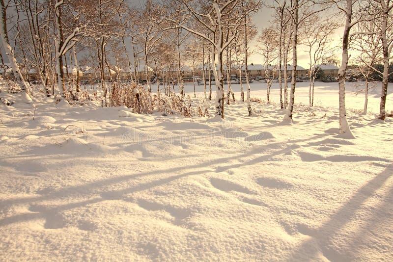 Mooie bomen die met sneeuw worden behandeld stock afbeeldingen