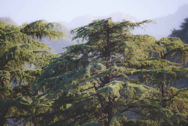 Mooie bomen op berg royalty-vrije stock foto