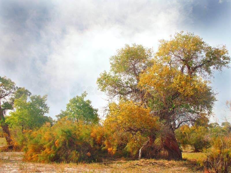 Mooie bomenturanga in de steppe royalty-vrije stock foto's