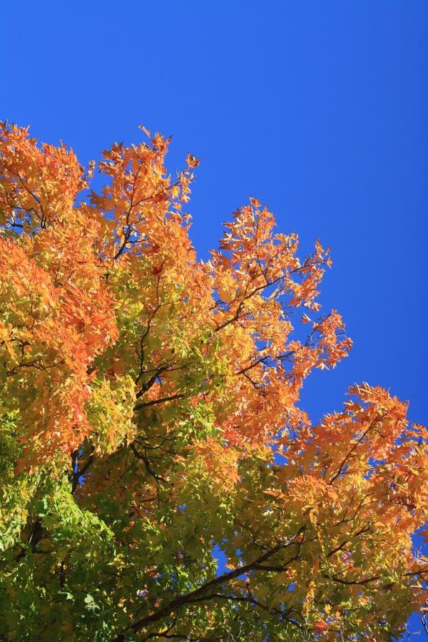 Mooie boom en hemel stock foto