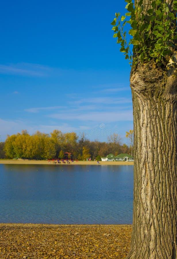 Mooie boom naast een meer stock foto
