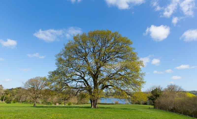 Mooie boom op Engels gebied met blauwe hemel en wolk royalty-vrije stock foto's