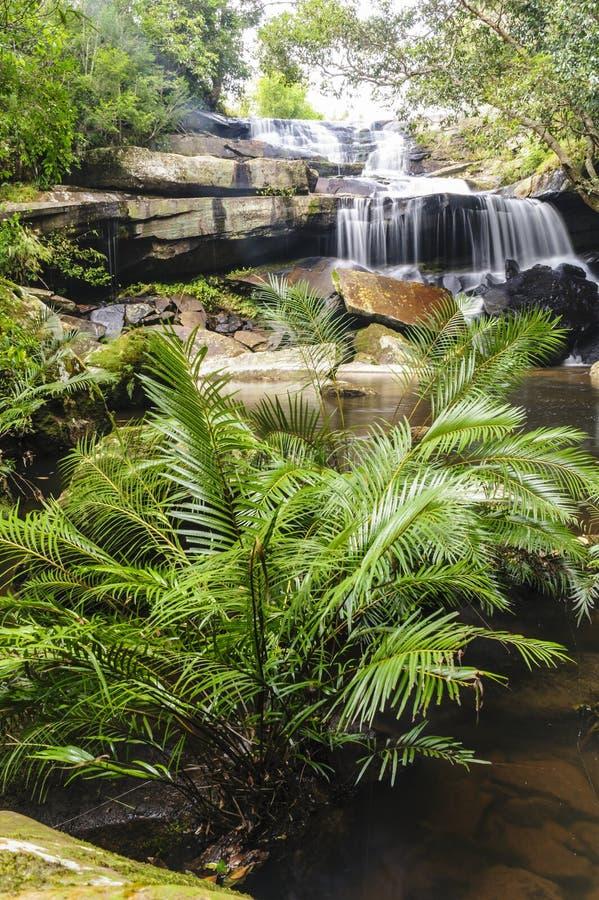 Mooie boswaterval in lentetijd. royalty-vrije stock afbeeldingen