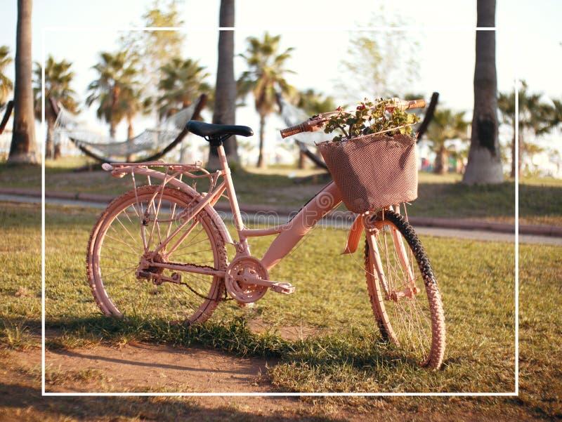 Mooie briefkaart met roze fiets en bloemen Klaar-gemaakte vakantiekaart voor ontwerpers stock foto's