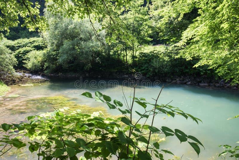 Mooie bron van ljubljanica in vrhnika, Slovenië stock foto