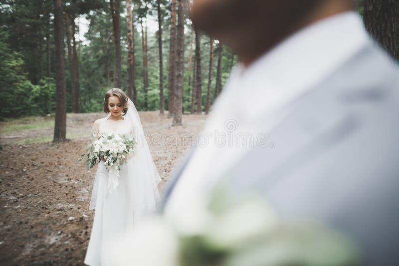 Mooie bruid en bruidegom die en op hun huwelijksdag omhelzen kussen royalty-vrije stock foto