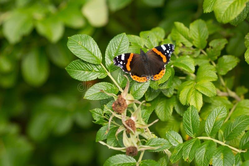 Mooie buterfly, insect op groene aard bloemenachtergrond royalty-vrije stock foto's