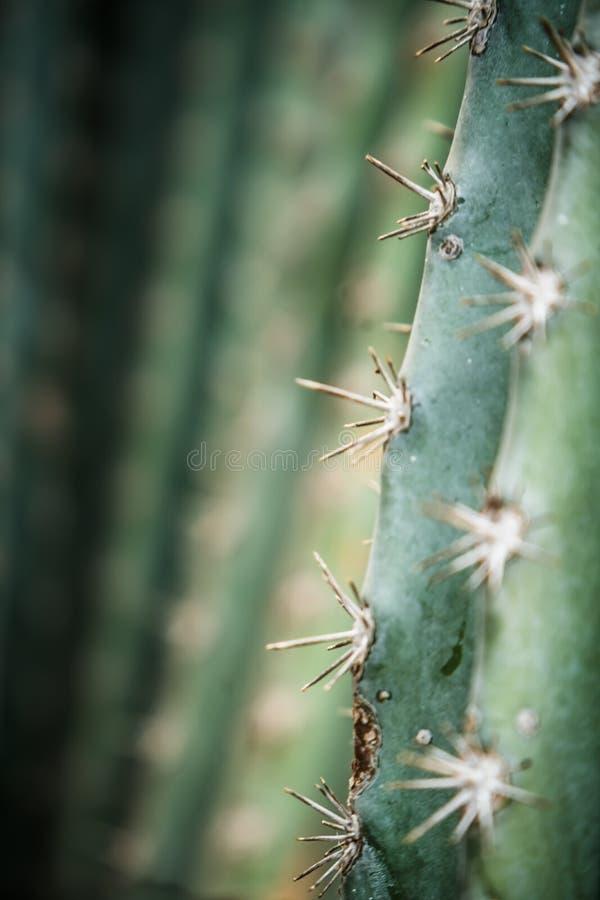 Mooie Cactus in de tuin, in detail royalty-vrije stock foto's