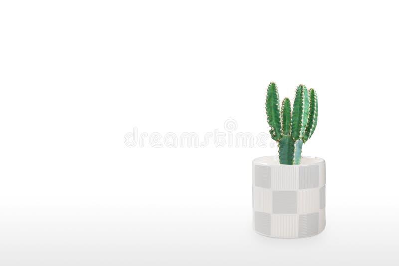 Mooie cactus geïsoleerd op witte achtergrond Op de houten tafel kleurige keramische pot stock fotografie