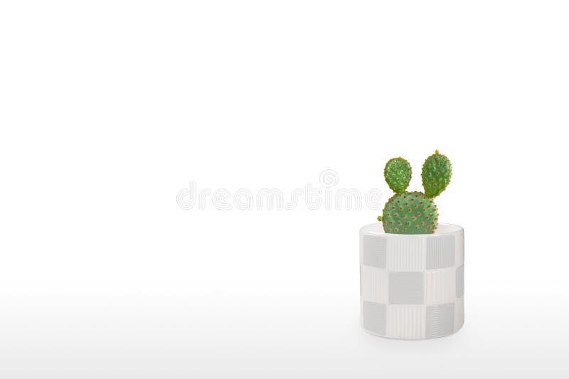 Mooie cactus geïsoleerd op witte achtergrond Op de houten tafel kleurige keramische pot stock foto's
