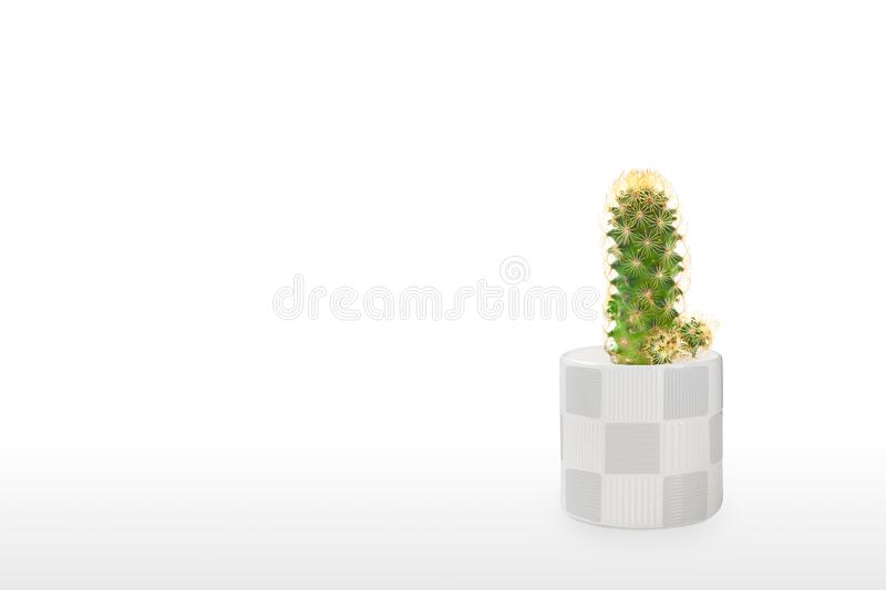 Mooie cactus geïsoleerd op witte achtergrond Op de houten tafel kleurige keramische pot royalty-vrije stock foto's