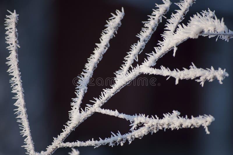 Mooie close-up van ijskristallen op boomtakken stock fotografie