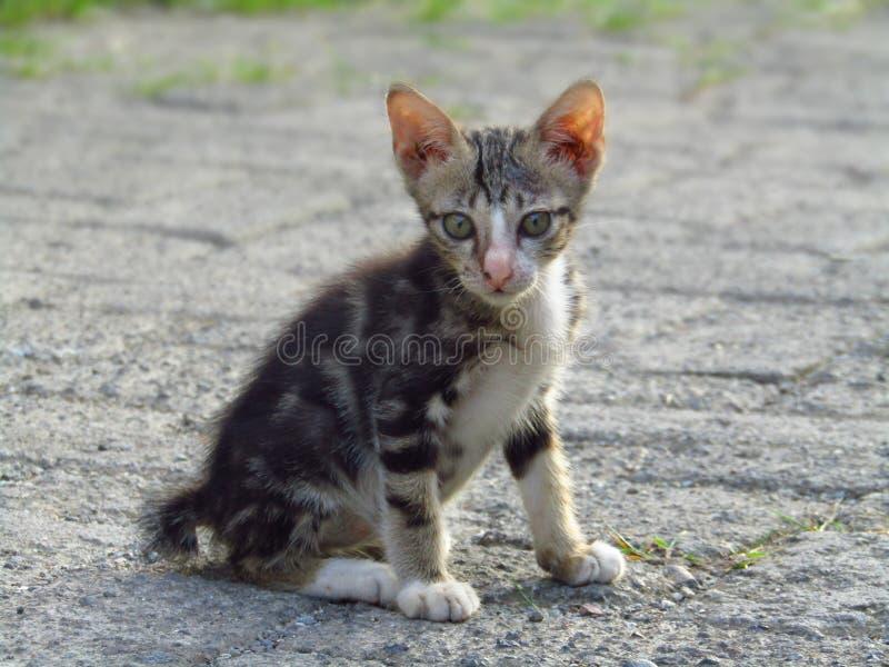 Mooie close-upfoto van grijs en wit katje stock afbeelding
