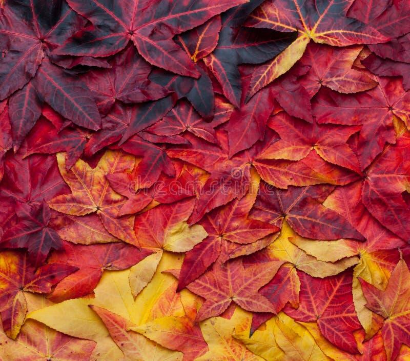Mooie collageachtergrond van de herfstbladeren van geel tot donkerrood stock foto's