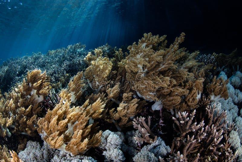 Mooie Coral Reef in Raja Ampat, Indonesië royalty-vrije stock foto