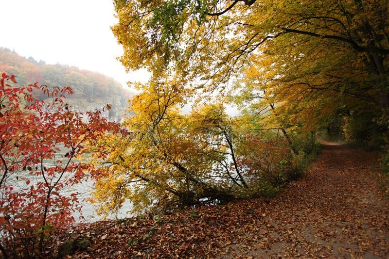 Mooie dalings bosweg bij de rivierbank van Donau stock afbeeldingen