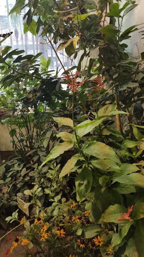 Mooie de aard van vlindervlekken stock fotografie