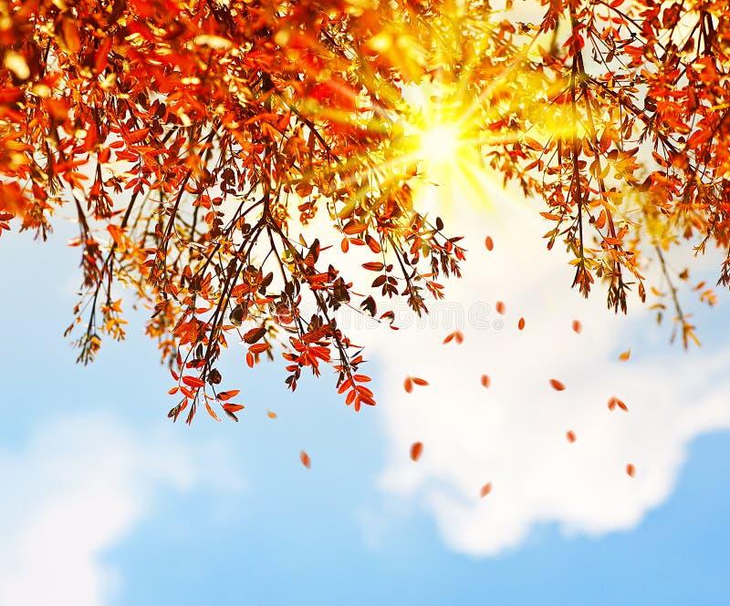 Mooie de bladeren van de de herfstboom grens als achtergrond stock foto