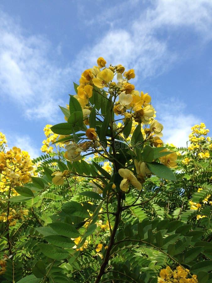 Mooie de boomaard van de bloemhemel royalty-vrije stock foto