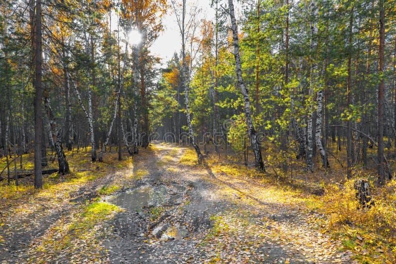 Mooie de herfst bosweg bij zonsondergang royalty-vrije stock foto