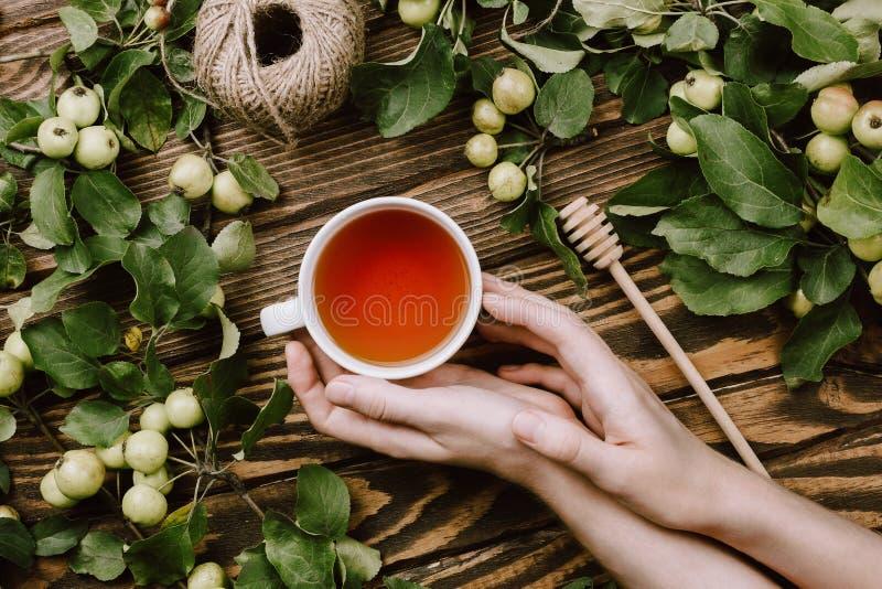 Mooie de herfst comfortabele flatlay met appelboom vertakt zich met rijpe vruchten, vrouwen` s handen die kop van warme thee houd stock foto