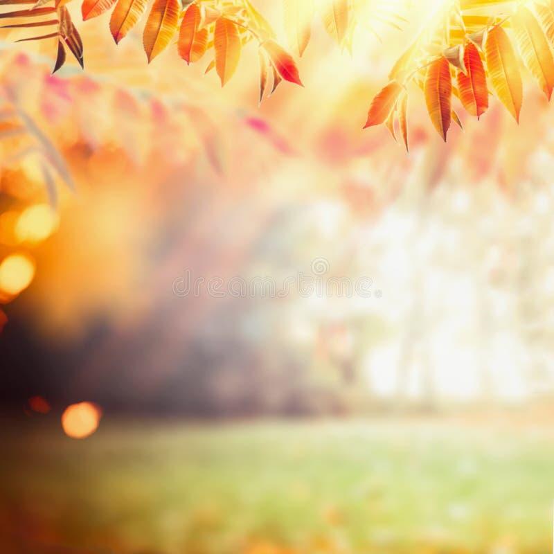 Mooie de herfstachtergrond met kleurrijk dalingsgebladerte bij zonnestraalachtergrond Dalings openluchtaard stock afbeelding