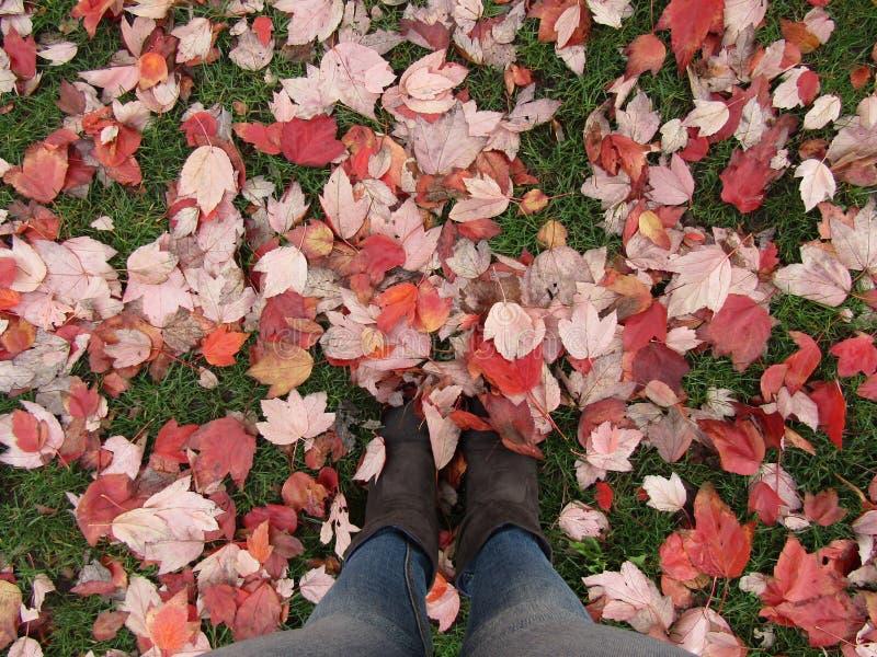 Mooie de herfstbladeren stock foto's