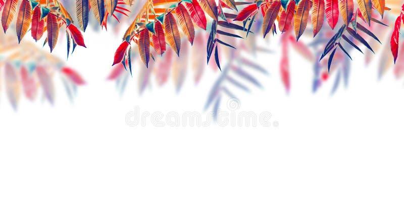 Mooie de herfstbladeren, kleurrijk die gebladerte, op witte achtergrond wordt geïsoleerd De dalingsbomen verlaat grens stock afbeelding