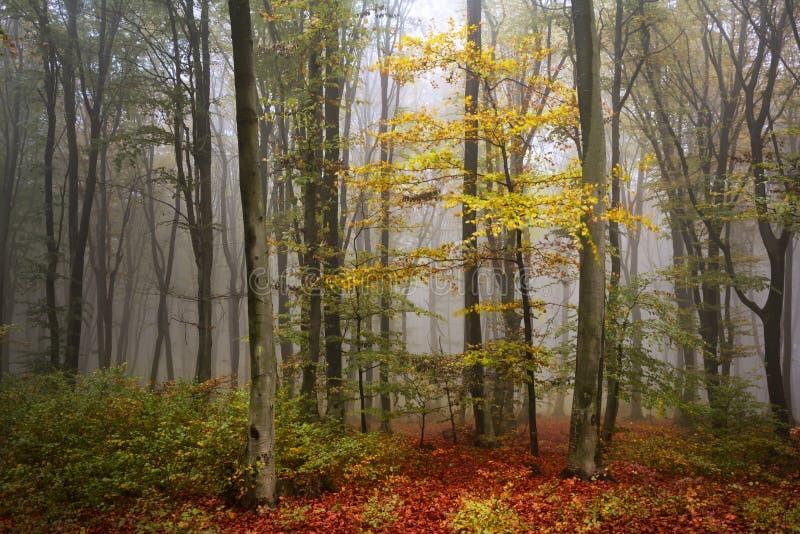 Mooie de herfstbomen in een mistig bos royalty-vrije stock fotografie