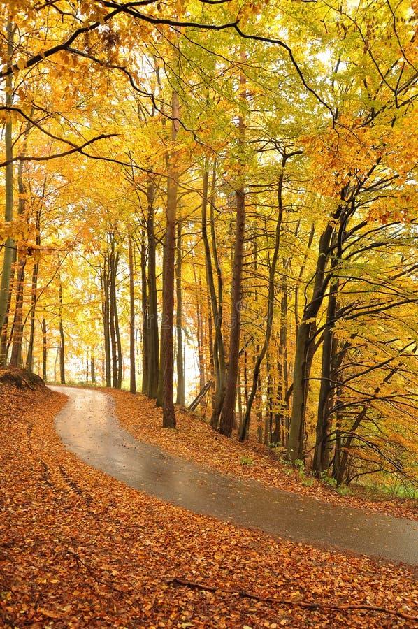 Mooie de herfstbomen en weg stock foto