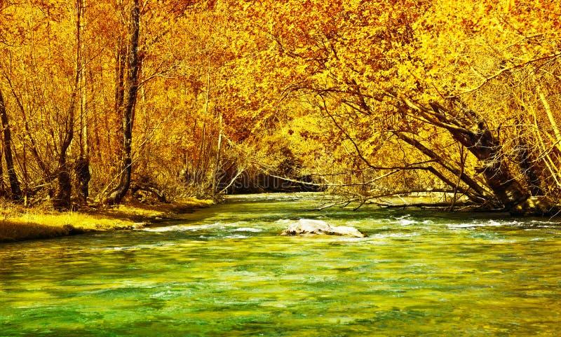 Mooie de herfstbos en rivier royalty-vrije stock afbeeldingen