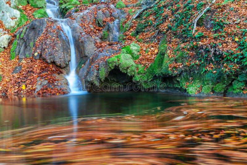 Mooie de herfstgebladerte en bergstroom in het bos stock foto's