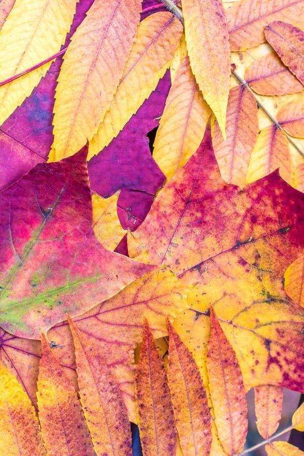 Mooie de herfstkleuren van gevallen bladeren royalty-vrije stock foto's