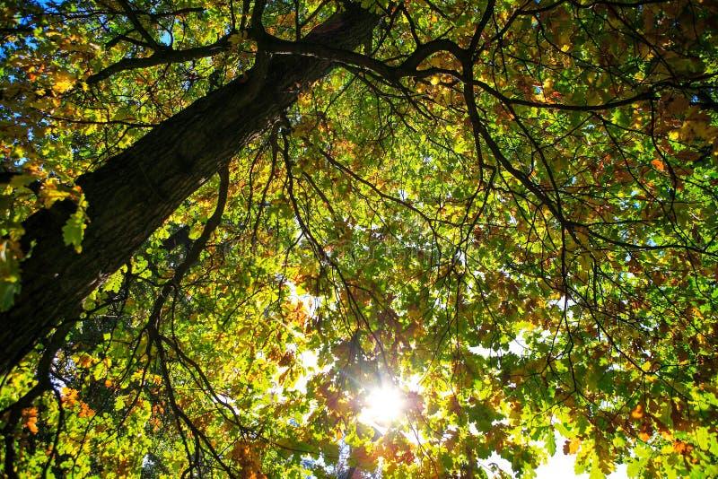 Mooie de herfstlandschappen royalty-vrije stock foto