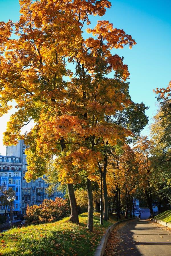 Mooie de herfstlandschappen royalty-vrije stock foto's