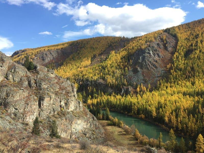 Mooie de herfstmening van de vallei van de bergrivier Autumn Landscape Chuyarivier De Bergen van Altai royalty-vrije stock afbeeldingen