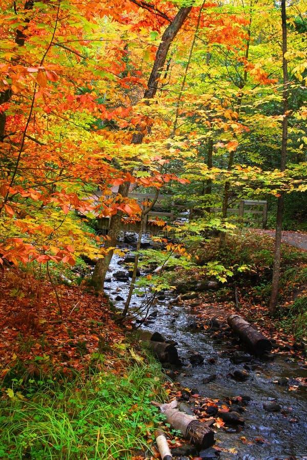 Mooie de herfstscène royalty-vrije stock fotografie