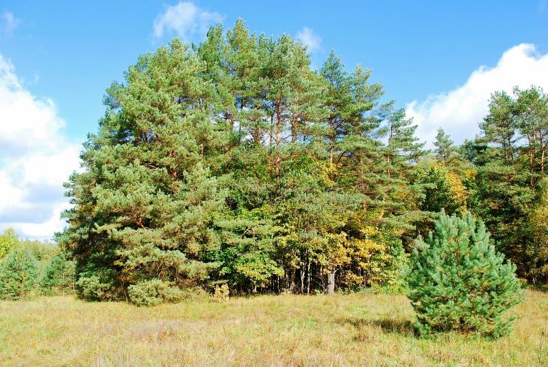 Mooie de herfstscène in bos bij zonnige middag stock foto's