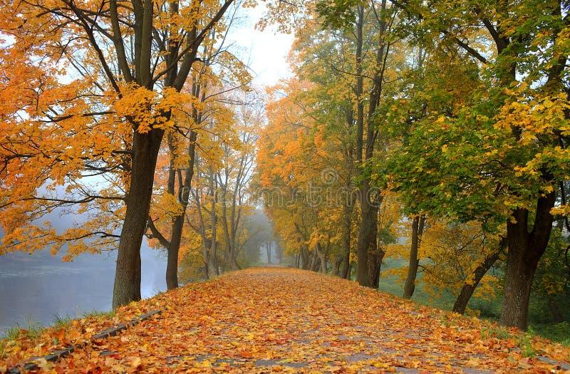 Mooie de herfstweg in het park royalty-vrije stock afbeeldingen