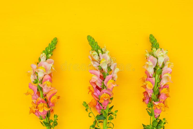 Mooie de lente roze bloemen op gele de bovenkantmening van de pastelkleurlijst Doorboor bloemengrens Vlak leg royalty-vrije stock fotografie