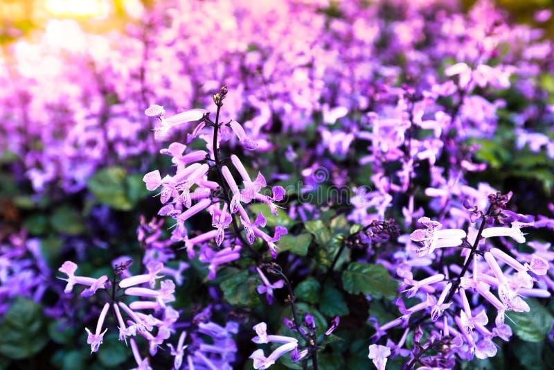 Mooie de lenteachtergrond stock foto
