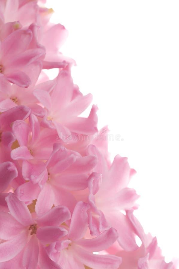 Mooie de lentebloem van kleurenhyacint royalty-vrije stock afbeeldingen