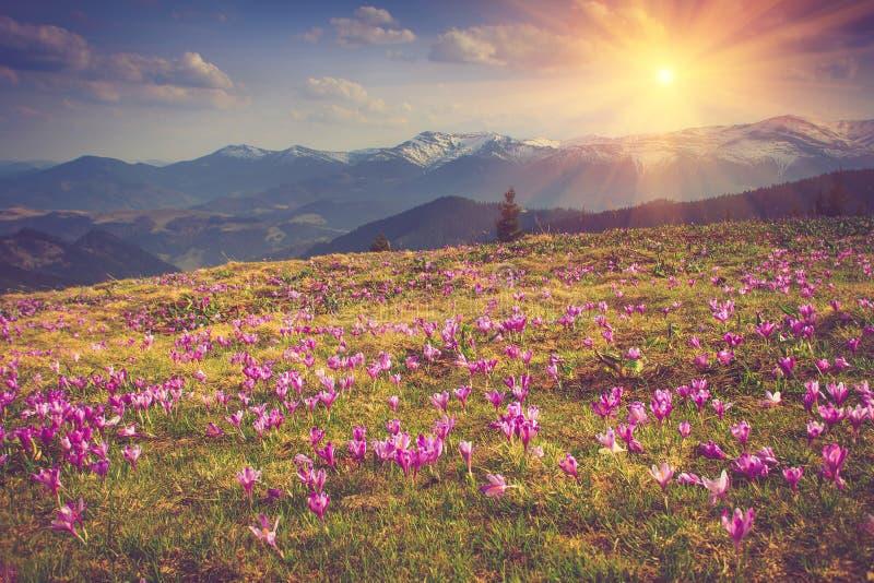 Mooie de lentebloemen in de bergen royalty-vrije stock afbeeldingen